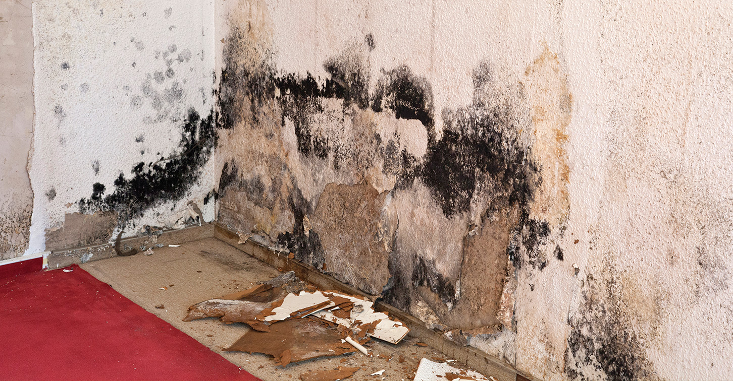 Mould Removal Winmar London Ontario